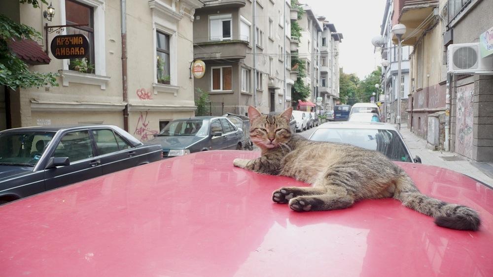 котка, софия, задръстване, коте, котарак, улица, малките пет кьошета